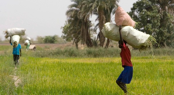 Plaidoyer pour une agriculture africaine
