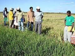 Parcelles et élevages de démonstration : capitalisation d'expériences dans trois régions de Madagascar