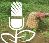 Presse agricole au Mali :L'ONG Radios rurales internationales à l'avant-garde du combat