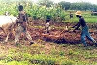 Relance du secteur agricole au Bénin : Le plan stratégique coûte 1.808