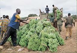 Priorité à l'indépendance agricole congolaise