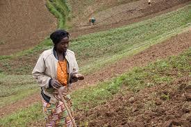 Loi Agricole au parlement de la RD Congo