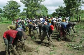 Campagne agricole 2011-2012 : OPTIMISME DE RIGUEUR à LA CMDT