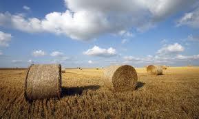 Terres cultivables et terres cultivées : Apports de l'analyse croisée de trois bases de données à l'échelle mondiale