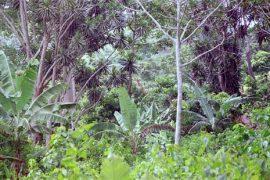 L'accaparement des terres recolonise l'Afrique : Le Togo s'y enfonce à petits coups !