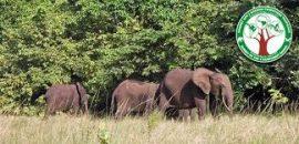 Journée de la Forêt Afrique Centrale 3