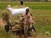 Bulletin Nyéléni spécial volatilité des prix et marchés alimentaires