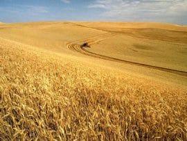Qu'est-ce qui caractérise le discours et les actions au niveau international en matière d'investissement dans l'agriculture aujourd'hui?