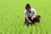 G20 : cinq priorités pour améliorer la sécurité alimentaire mondiale