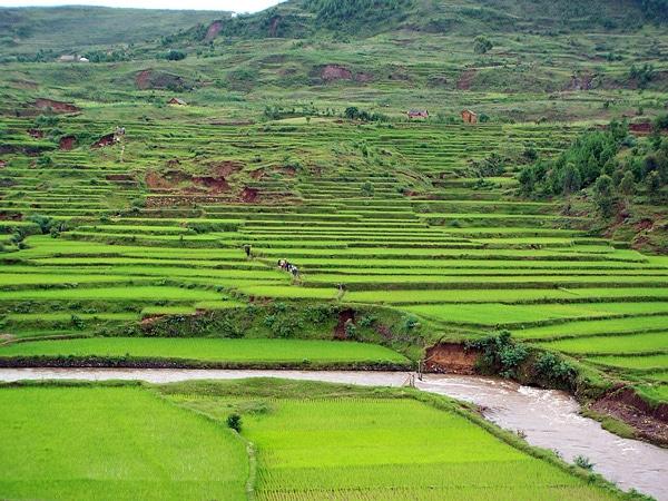 Madagascar, le combat des paysans pour leur métier