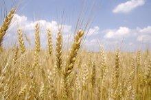 G20 agricole : des décisions en demi-teinte