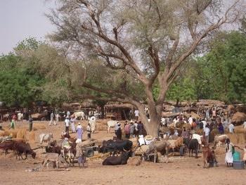 Bulletin de veille - Spécial « Organisations paysannes » n°4