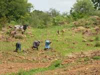 Avis sur la situation alimentaire et les perspectives agricoles 2011-2012 au Sahel et en Afrique de l'ouest