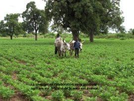 Foncier agricole : La feuille de route est prête