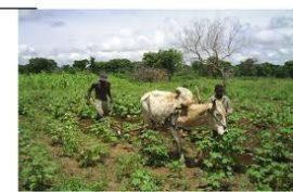 Appui technique massif aux petits producteurs agricoles