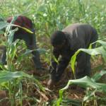 Développement de l'agriculture béninoise:La Sonapra multiplie les actions pour la promotion des filières agricoles