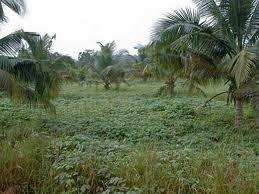 « L'environnement béninois n'est pas encore favorable à l'agrobusiness »