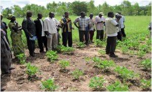 Innovation agricole : Succès d'un tandem entre paysans et chercheurs