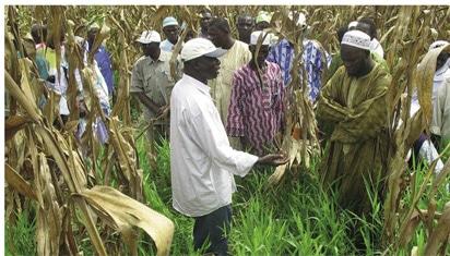 Techniques culturales : Le semis direct révolutionne l'agriculture
