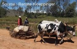 Financement agricole : les subventions sont-elles utiles ?