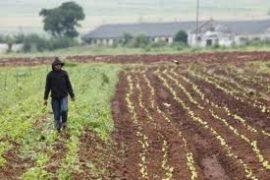 L'Afrique du Sud remet en chantier sa politique de redistribution des terres
