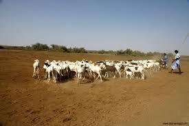 20-22 octobre 2011, Ouagadougou (Burkina Faso) – Atelier sous-régional de restitution de l'étude : « Etat des lieux des textes régissant la transhumance dans les pays membres de l'Autorité Liptako-Gourma »