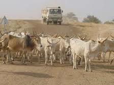 Conflits agriculteurs/ éleveurs : Des mécanismes pour instaurer un climat de paix