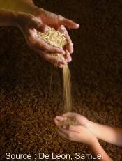 Quel rôle pour la microfinance dans la lutte contre l'insécurité alimentaire ?