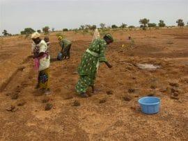 Travailler en partenariat aidera la petite agriculture du Sud à résoudre la crise alimentaire mondiale