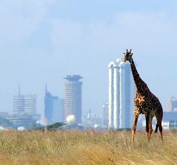 Naïrobi: la BAD, l'UA et la CEA examinent l'investissement foncier