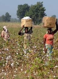 ADG News N° 27 : l'agriculture familiale refroidit la planète