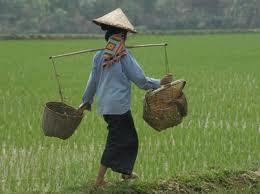 L'East Asia Emergency Rice Reserve : la lente construction d'un outil de régulation du marché du riz en Asie orientale (eng)