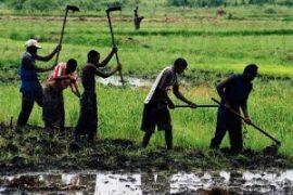A la une     Régions     Business     Energie     Finance     Indiscrétions     Décryptage  Sénégal : Les CRCR contre l'accaparement des terres