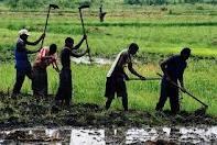 Programme national d'investissement agricole (Pnia) : 'Il n'y a pas un consensus fort'