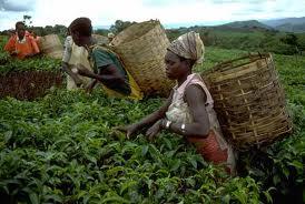 Démographie et sécurité alimentaire - L'économie non agricole peut-elle sauver l'Afrique rurale ?