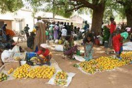 Micro assurance agricole indicielle : Les agriculteurs ouest africains récoltent leur plate-forme régionale