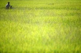 Le G20 veut mieux maîtriser les prix des denrées agricoles