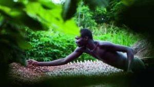 Côte d'Ivoire : cacao