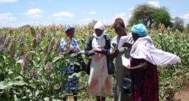 Adapter l'agriculture au changement climatique : Développer des stratégies appropriées avec les paysans en utilisant des Localités Analogues Climatiques en Afrique de l'Est et du Sud (projet CALESA)
