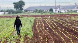 Comment l'Afrique brade ses terres