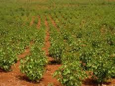 Concilier les biocarburants et la sécurité alimentaire