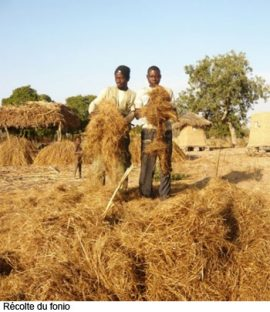 Déficit céréalier au Burkina Faso: compilation d'articles en ligne