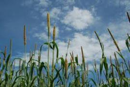 Lancement de la Bourse régionale des produits de base : Vers une meilleure commercialisation des récoltes