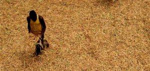 Burkina Faso: Etats généraux de l'agriculture et de la sécurité alimentaire - Des propositions pour rendre moderne et compétitif le secteur rural