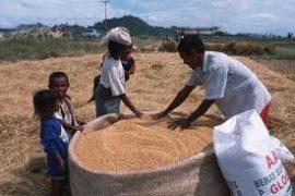 Incorporation de céréales locales dans la composition du pain : Les recettes pour lever le diktat du blé