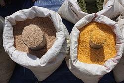Riziculture au Burkina Faso