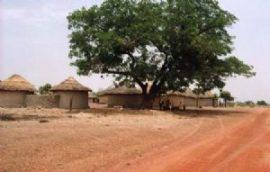 Guinée/agriculture : le gouvernement réclame le retour des magasins d'Etat dans le patrimoine public