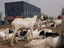 L'élevage pastoral au Sénégal entre pression spatiale et mutation commerciale
