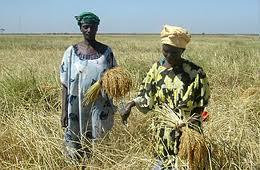 Agriculture : Une Fédération nationale des professionnels semenciers en gestation