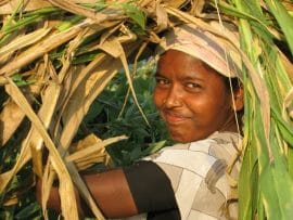 Est-ce que la recherche agricole peut aider à nourrir le monde?